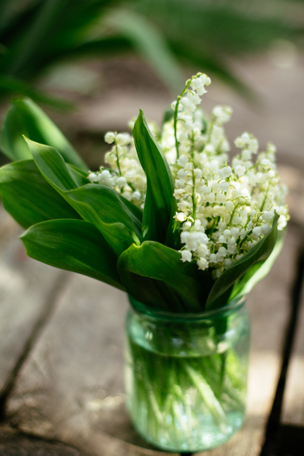 white flowers in clear glass vase