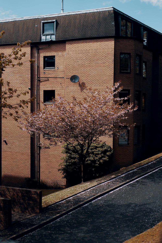brown tree beside brown concrete building