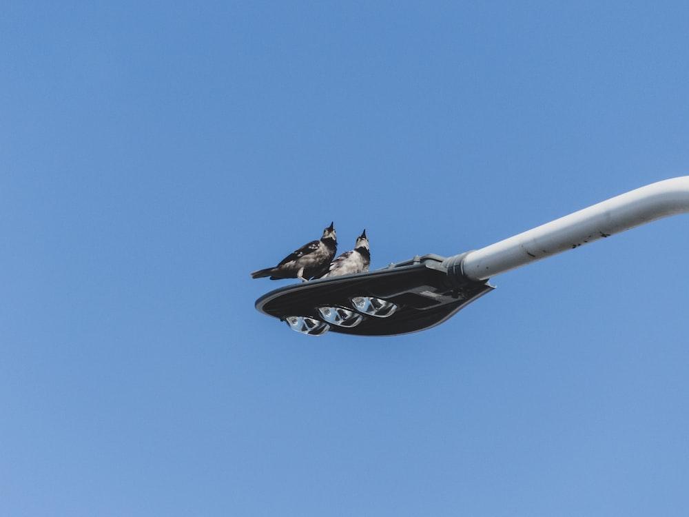black and white bird on white metal bar under blue sky during daytime