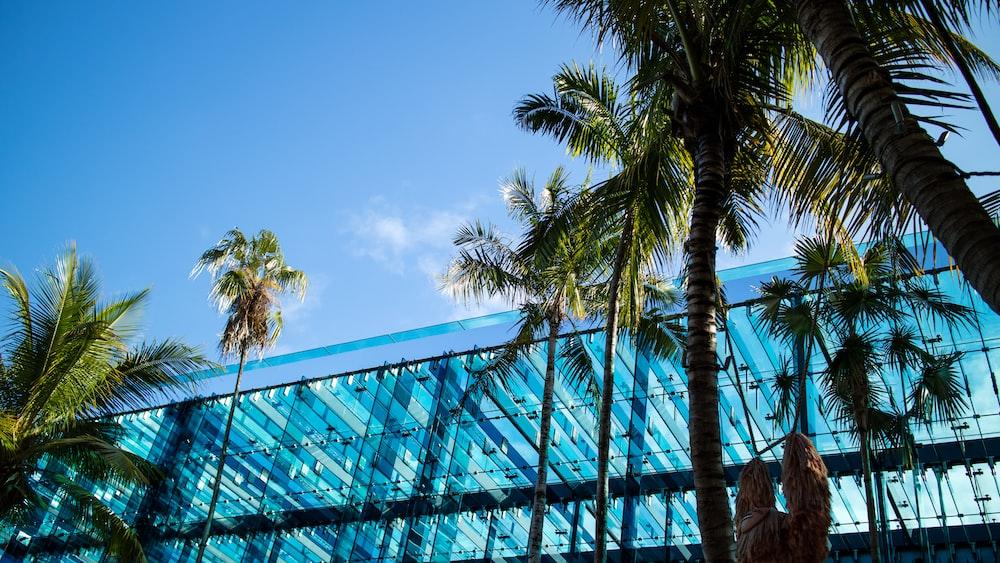 green palm tree near blue metal frame