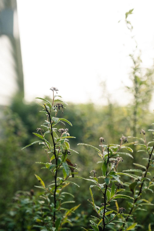 green plant in tilt shift lens