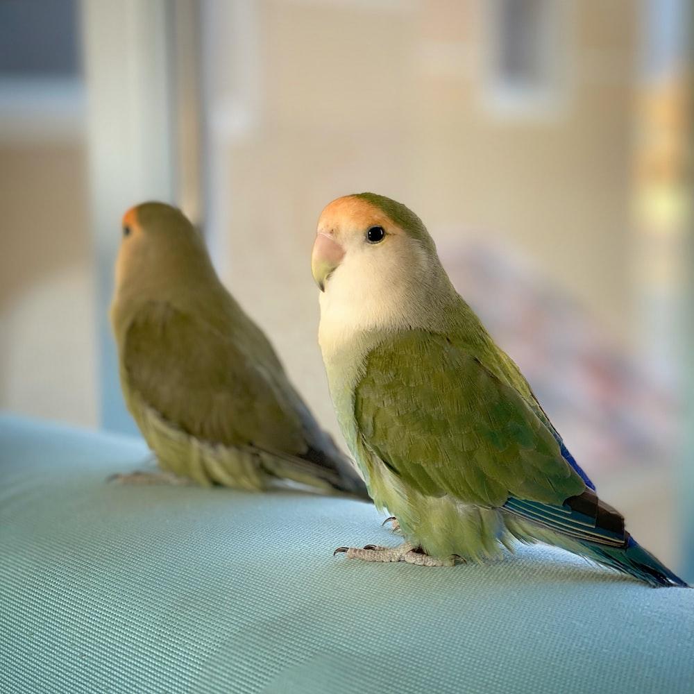 緑と茶色の2羽の鳥