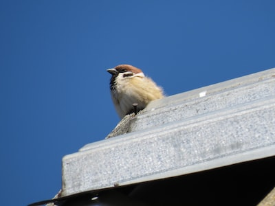 brown and white bird on white concrete wall during daytime