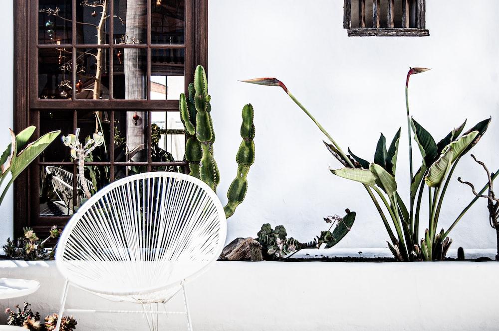 white and green plant on white ceramic vase