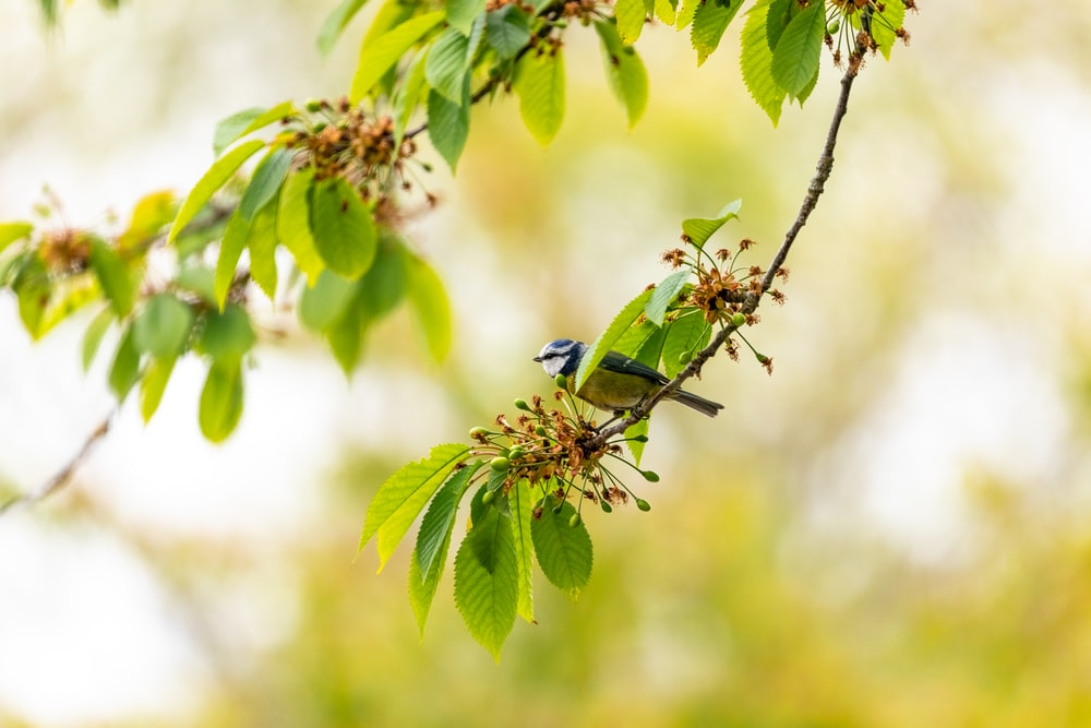 blue and green bird on green plant during daytime