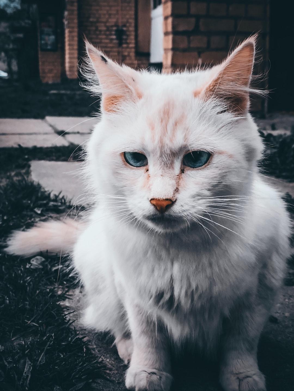 Cat 👀