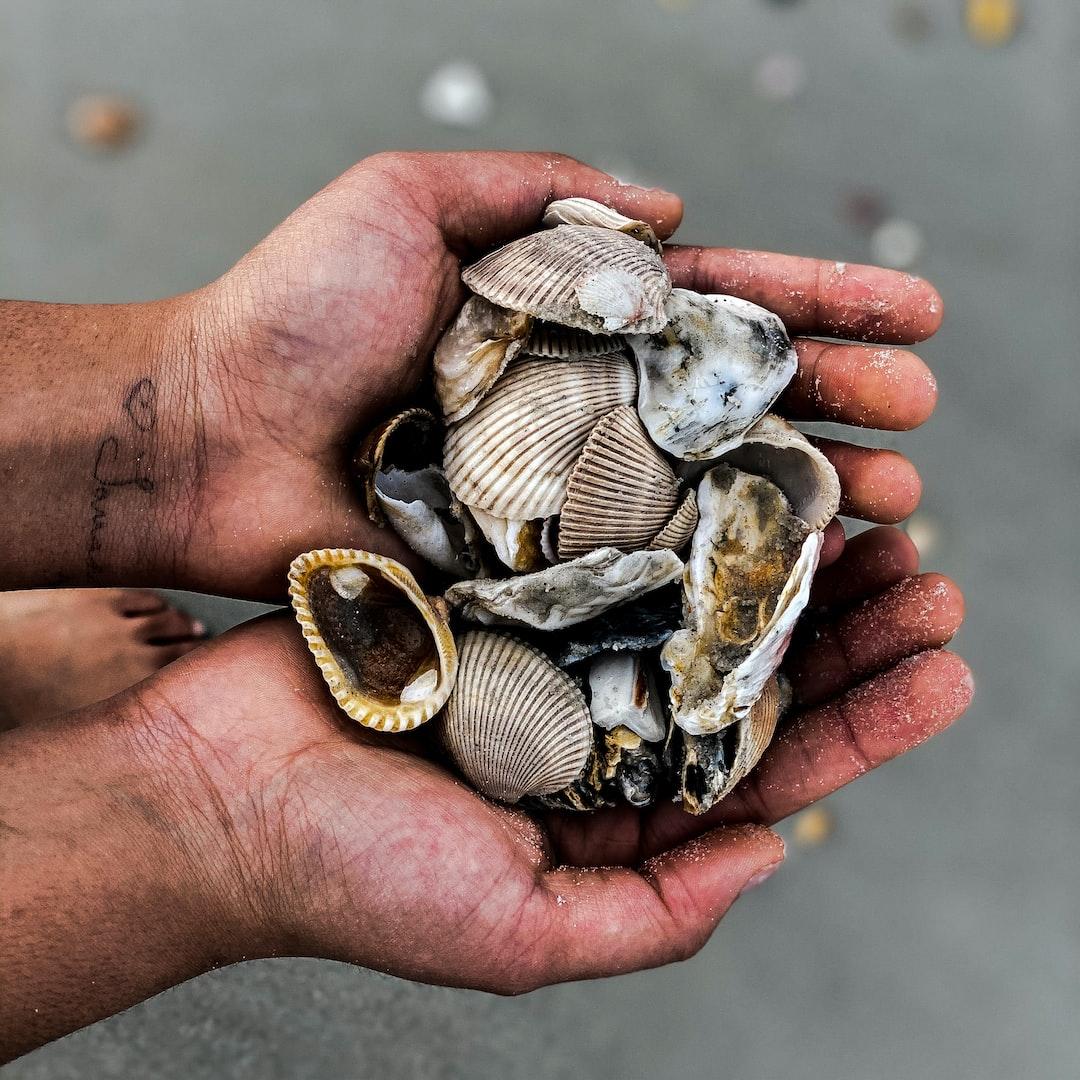 Girl holding seashells