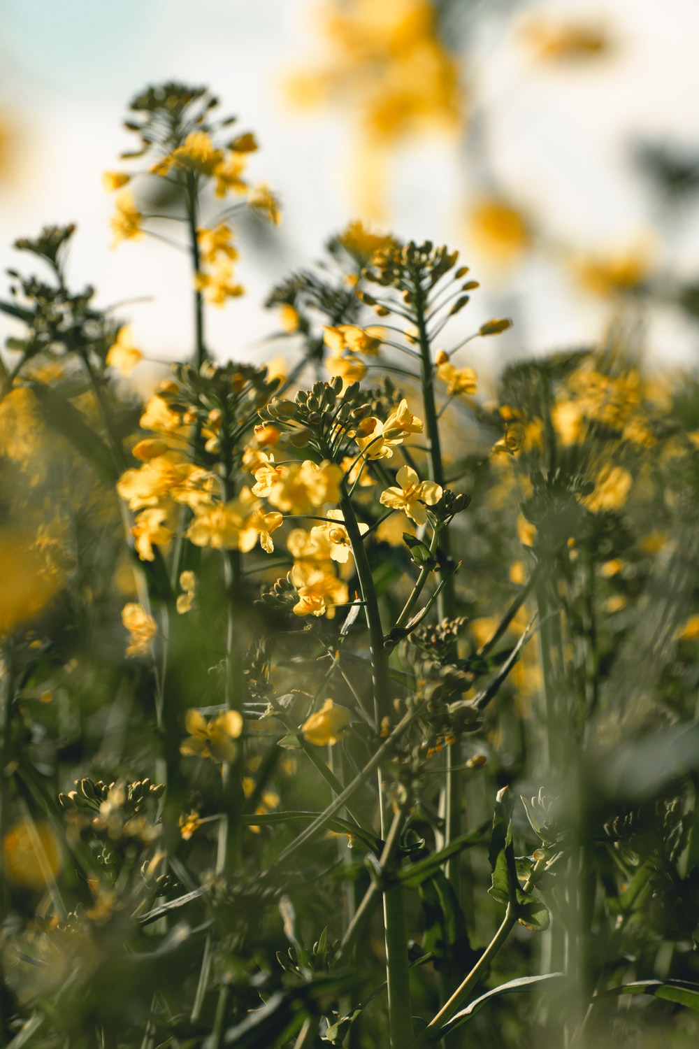 yellow flowers in tilt shift lens