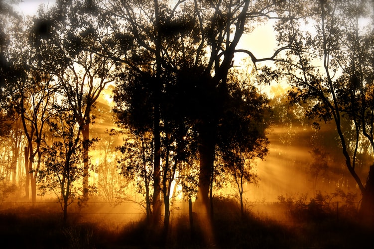 A photo of a tree, backlit by bright orange sunshine. There is a little fog so the light comes through in dramatic rays that look heavenly.