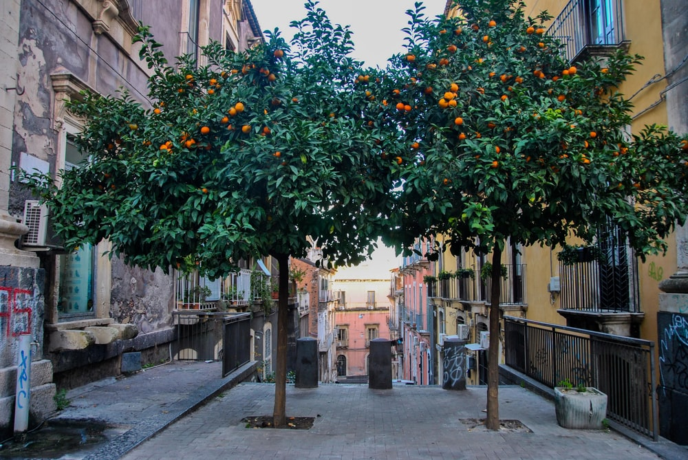green and yellow tree with orange fruit