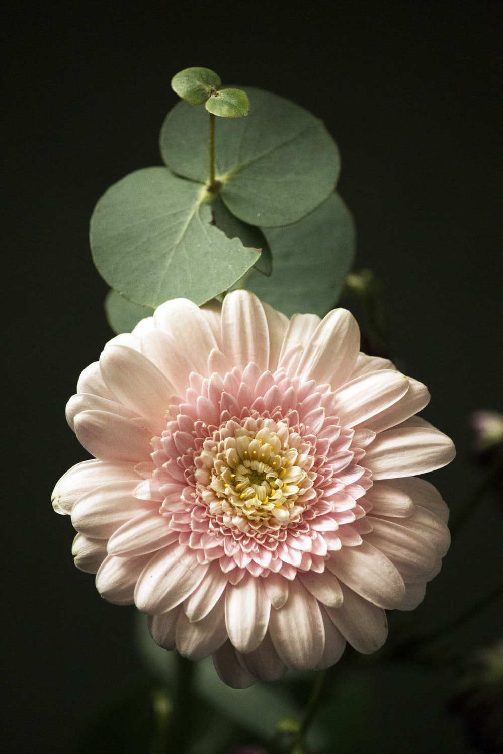 pink and white flower in macro shot