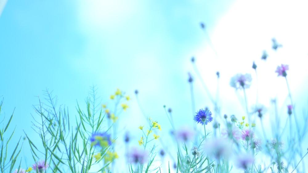 purple flowers under sunny sky