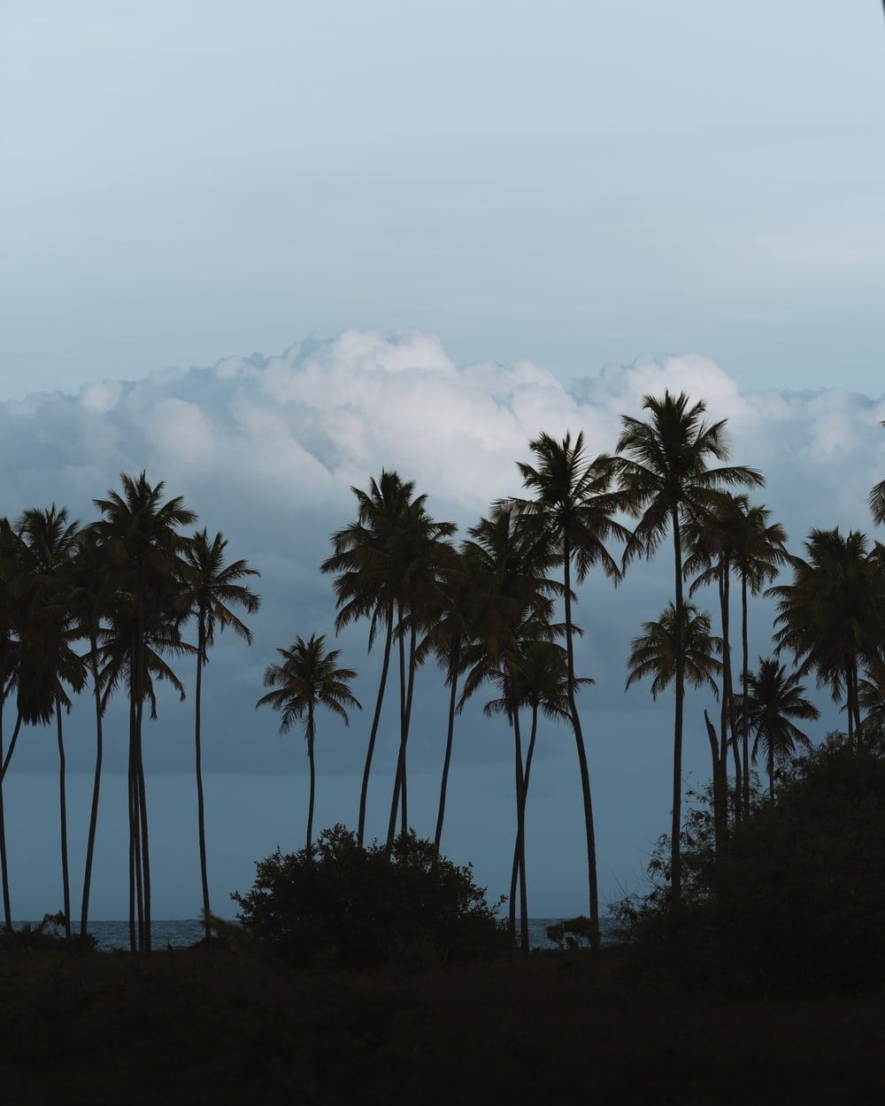 green palm trees under white clouds