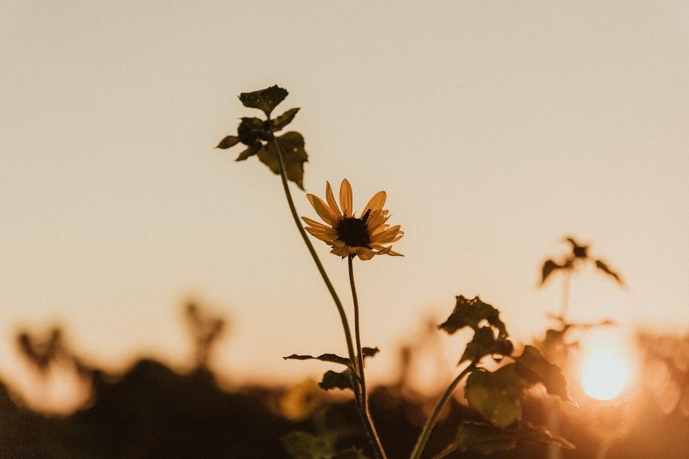 yellow and black flower in tilt shift lens