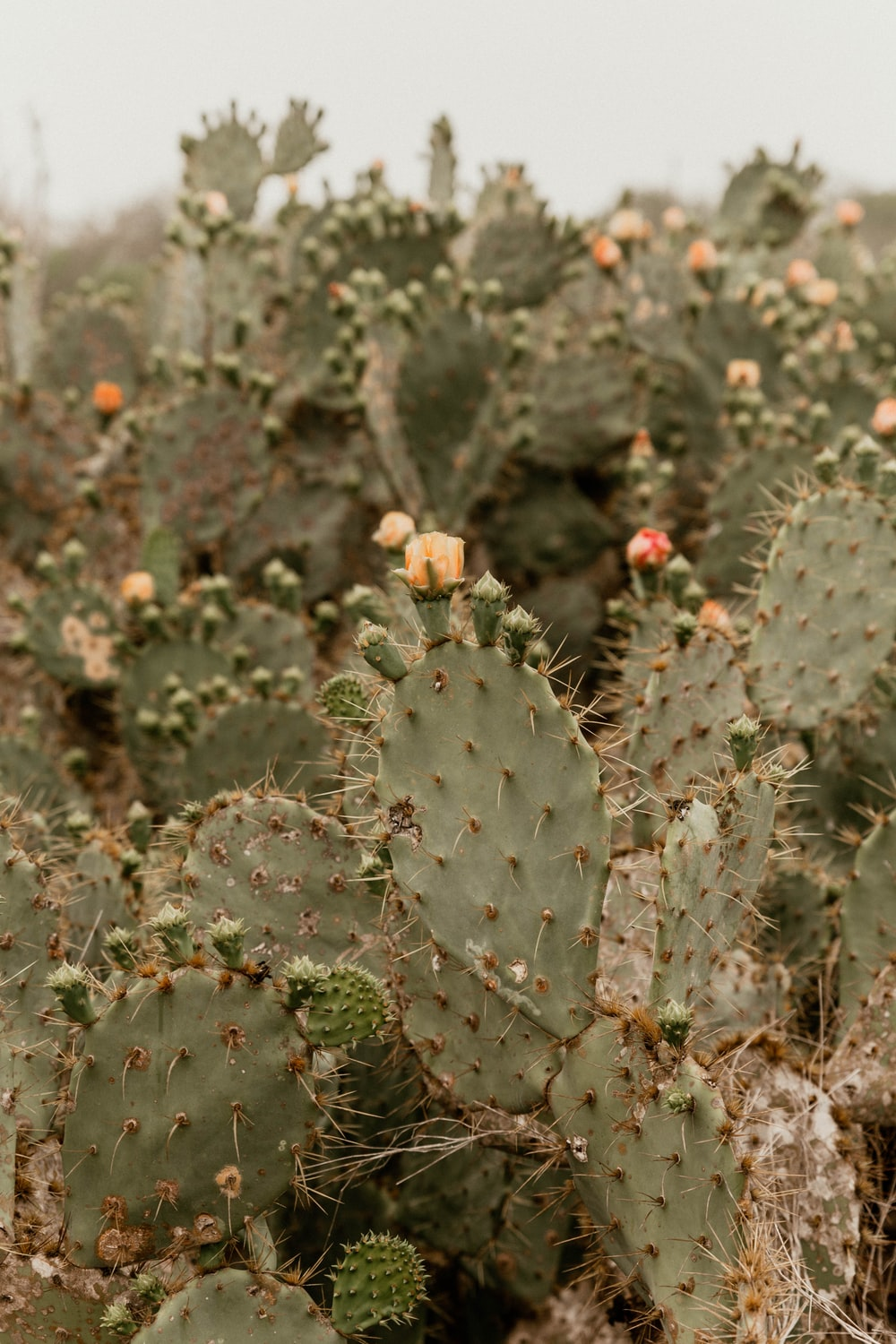 green cactus with red flowers