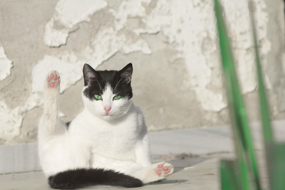 white and black cat on white and pink floral textile