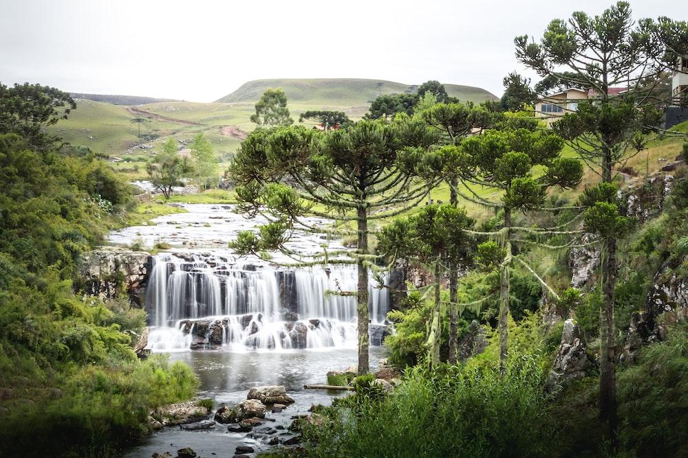 green trees near waterfalls during daytime