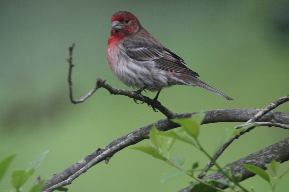 brown and red bird on tree branch