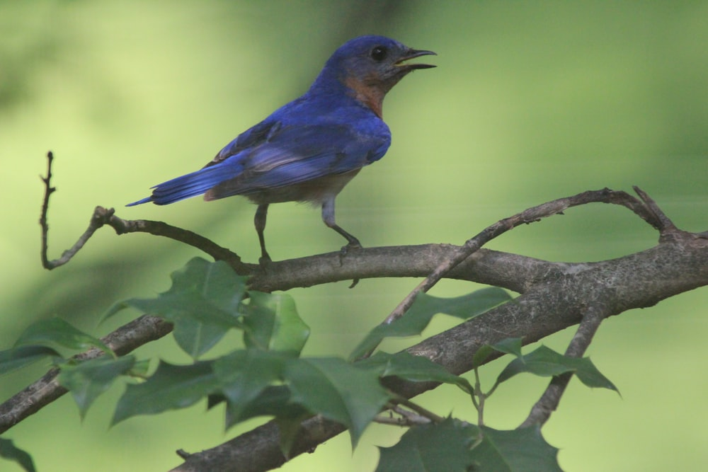 blue bird on tree branch during daytime