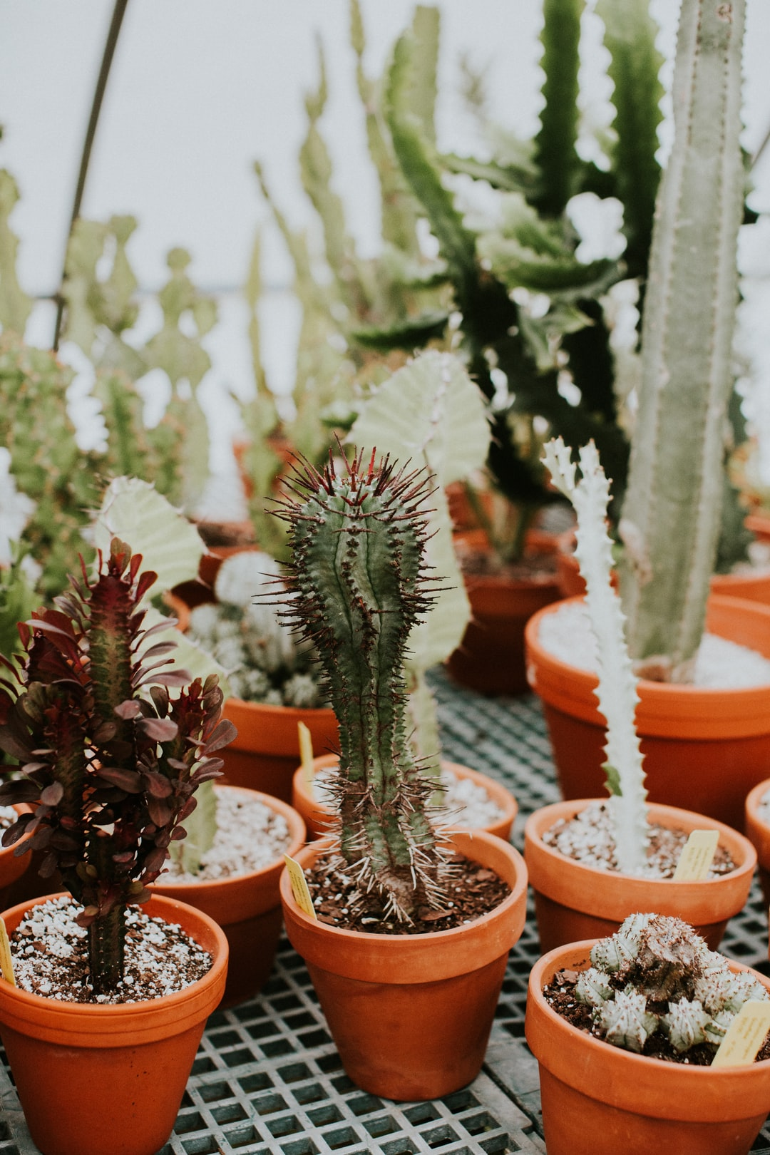 lots of greenery and cactus plants in a greenhouse