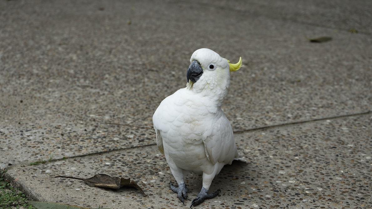 Birds at Royal national park