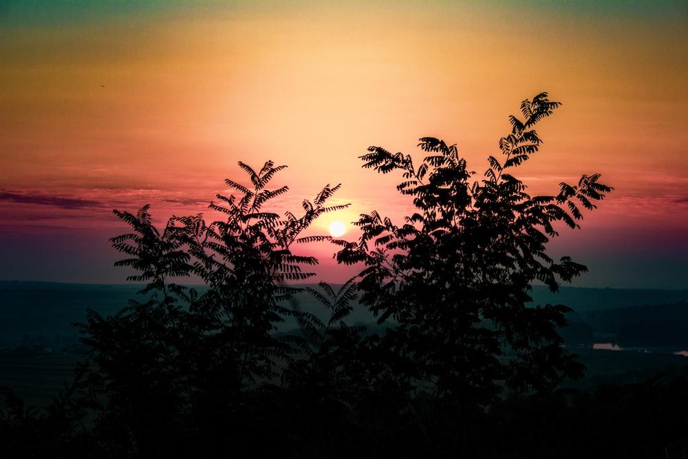 green plant under orange sky