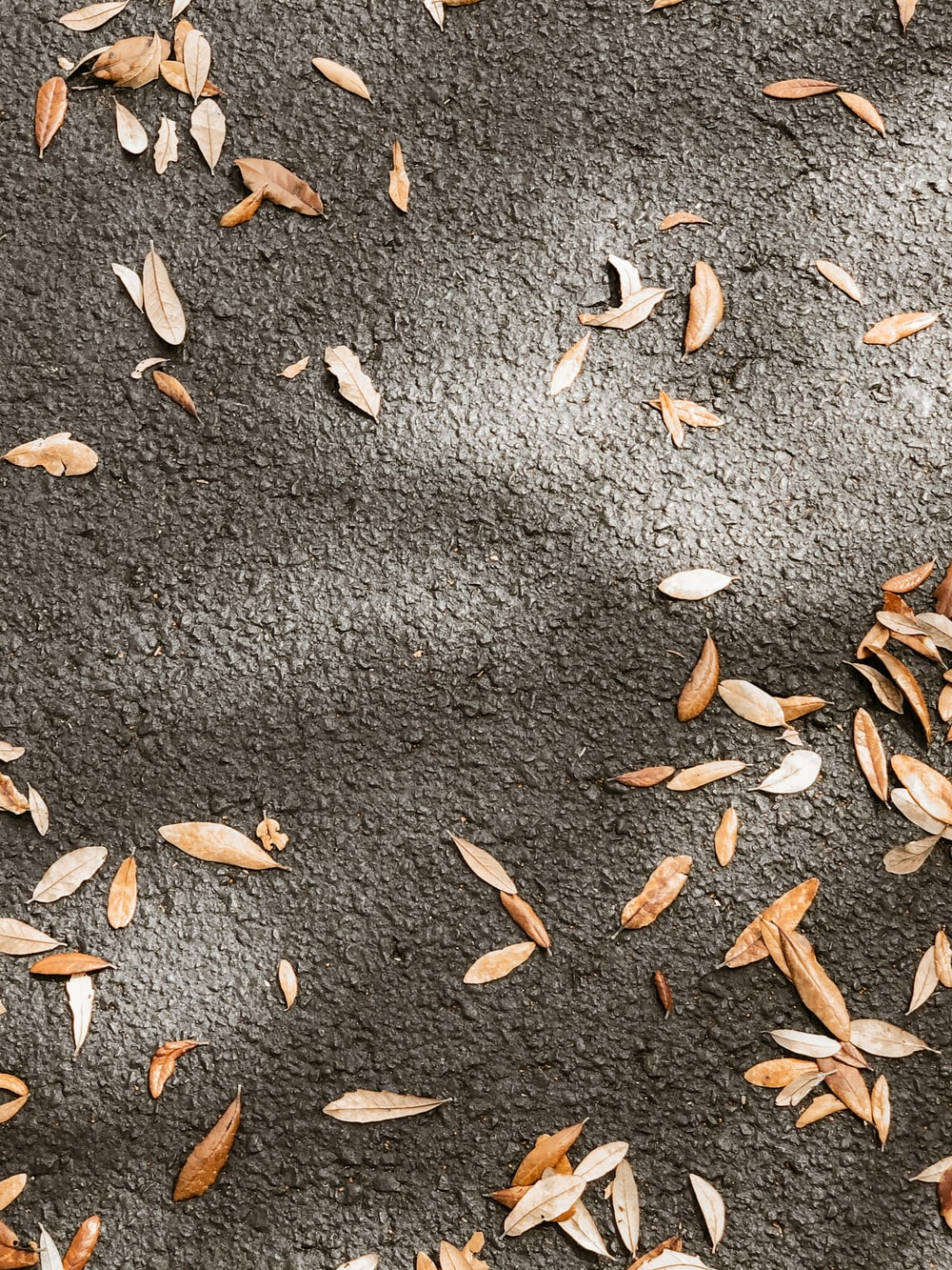 brown leaves on gray concrete pavement