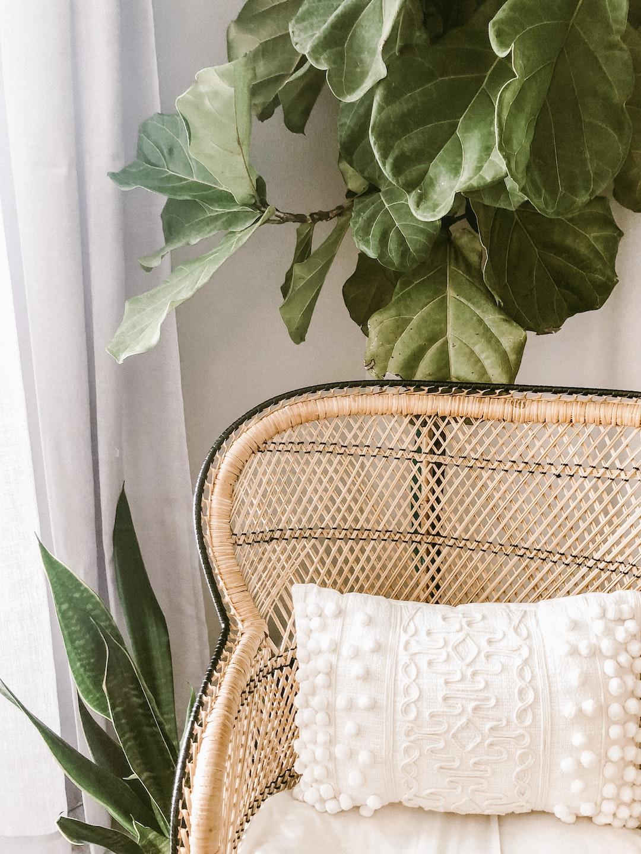 Boho rattan chair near a fiddle leaf fig and snake plant.