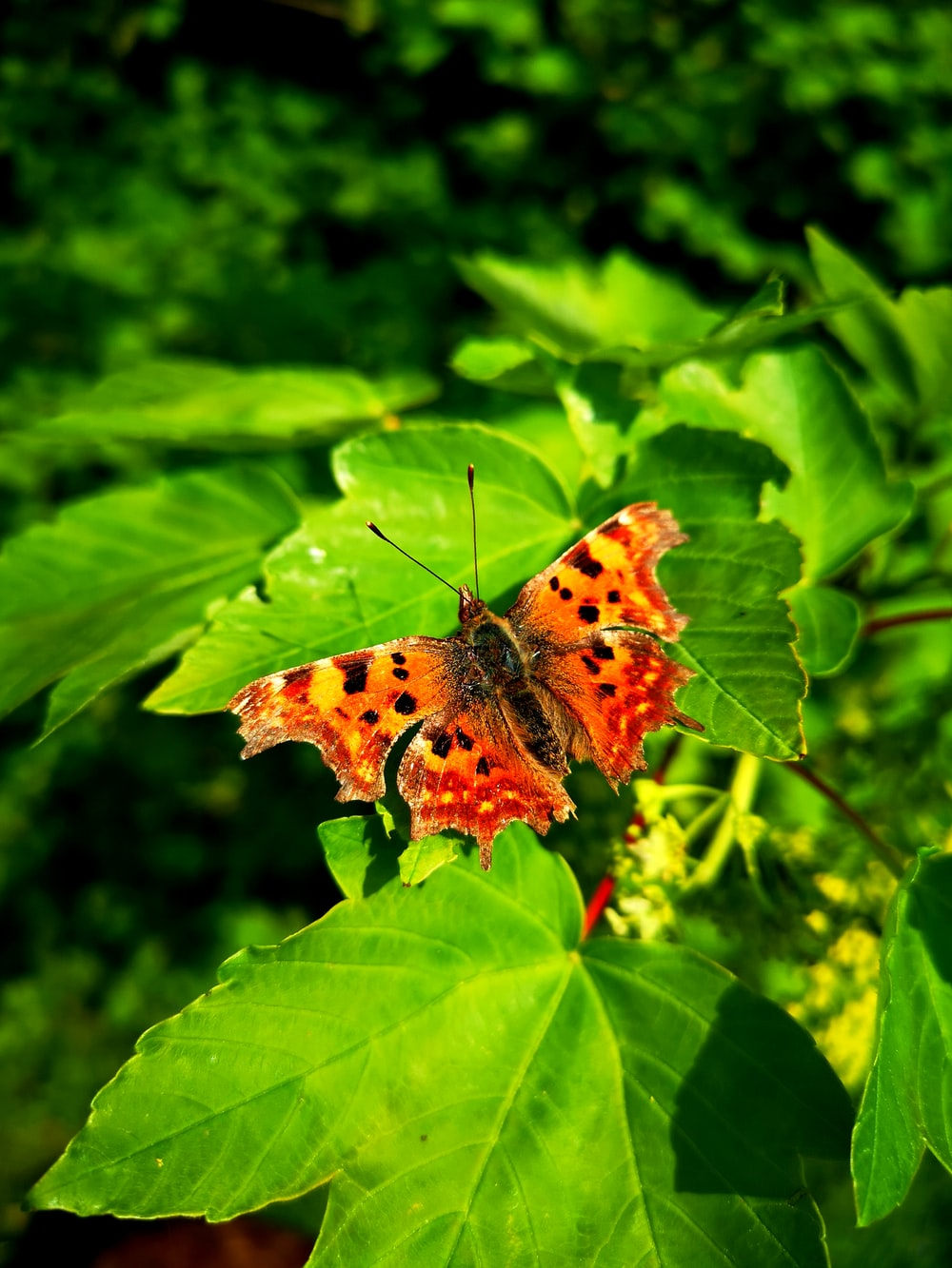 brown and black butterfly on green leaves
