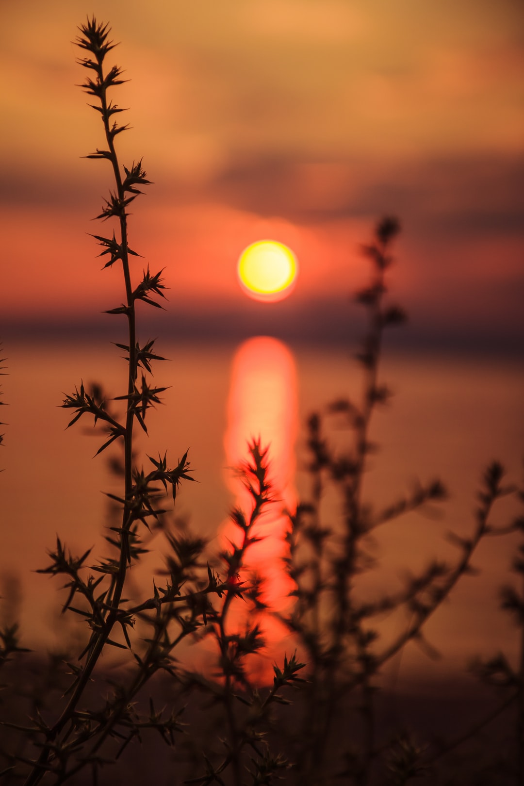 Sunset over the sea, as viewed through thorny weed