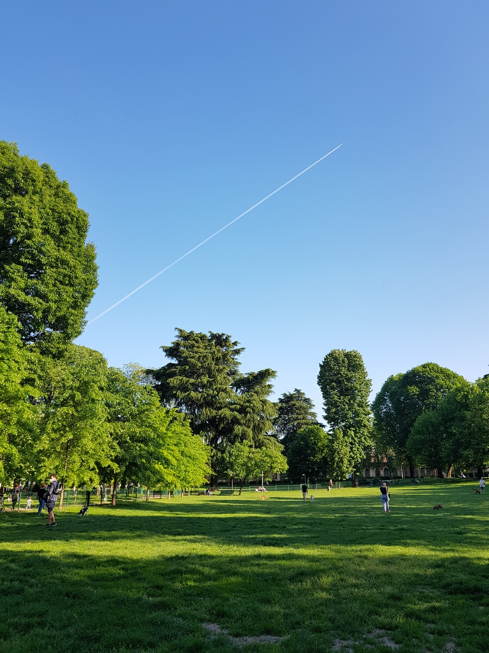 people walking on green grass field near green trees under blue sky during daytime