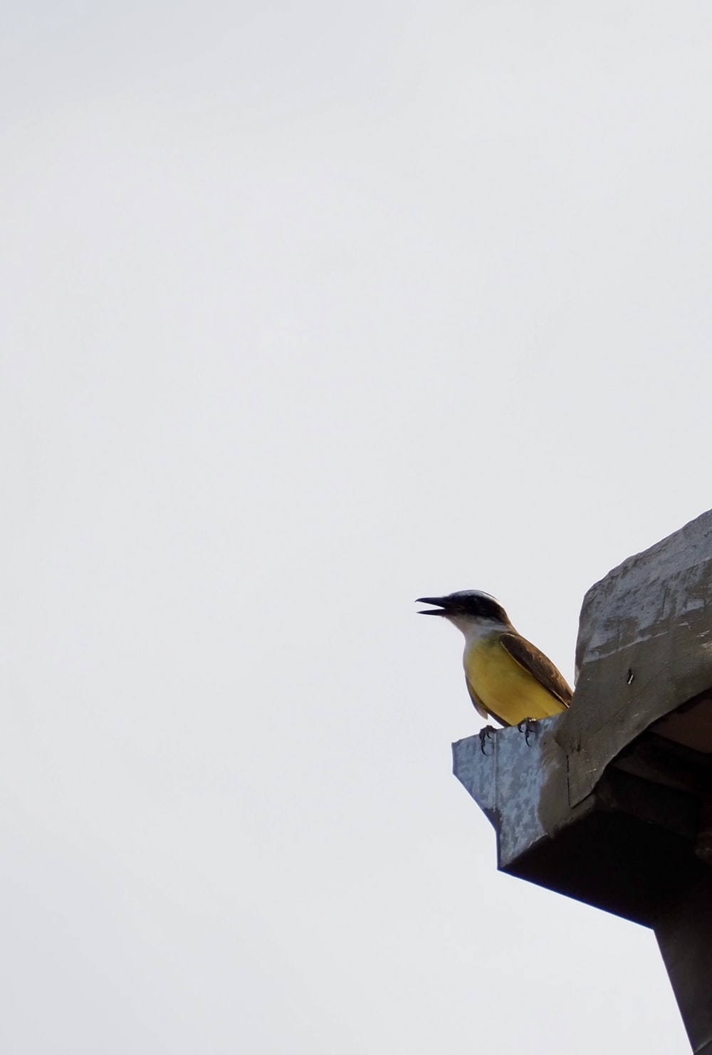 yellow and gray bird on gray concrete post