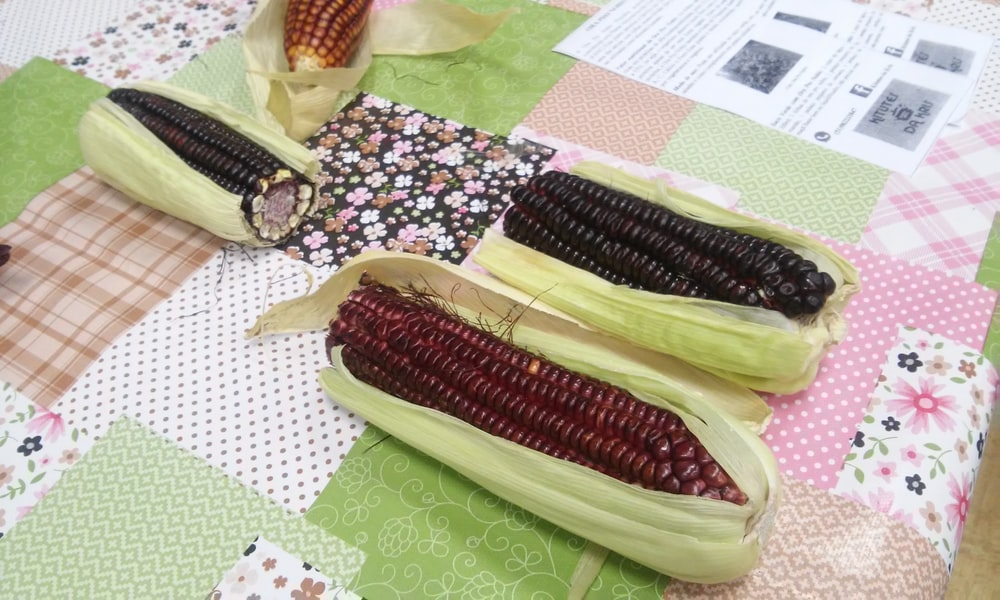 corn on green and white textile