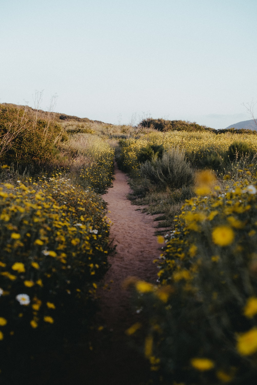 yellow flowers on brown dirt road