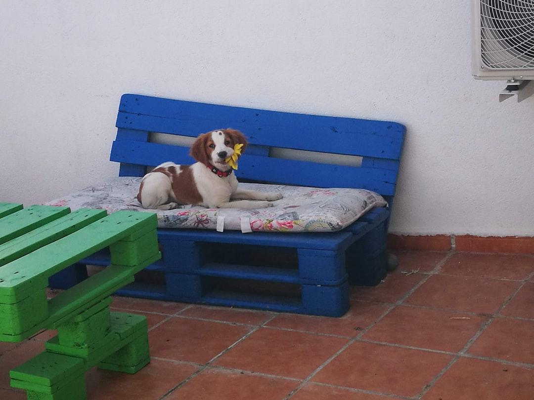 dog mochito flower breton