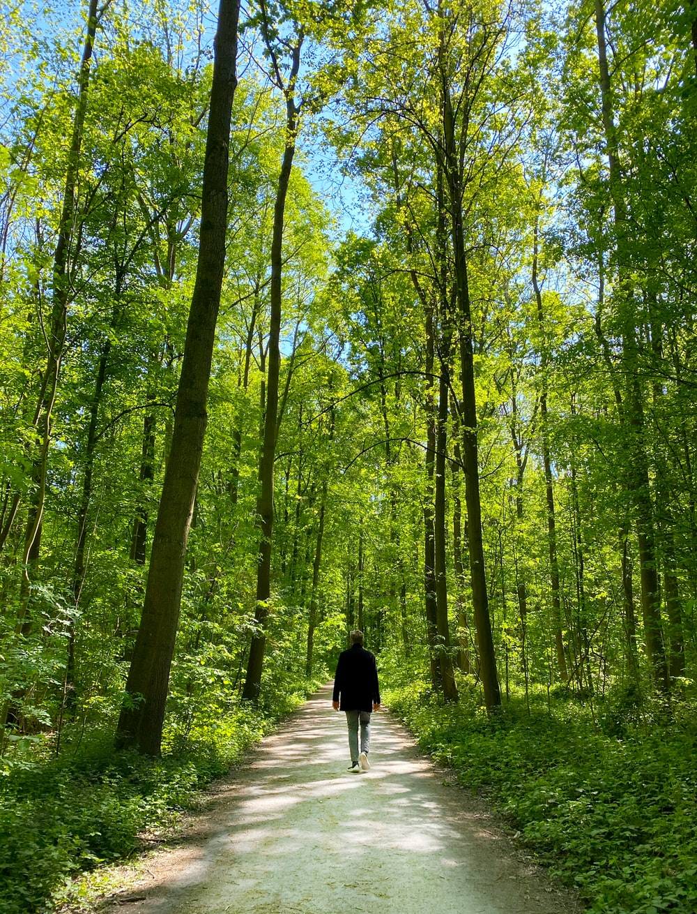 person walking on pathway in the middle of forest during daytime