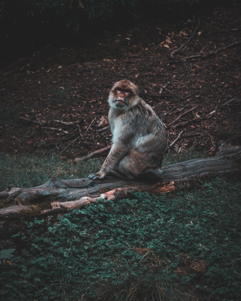 brown and white monkey sitting on brown tree branch during daytime