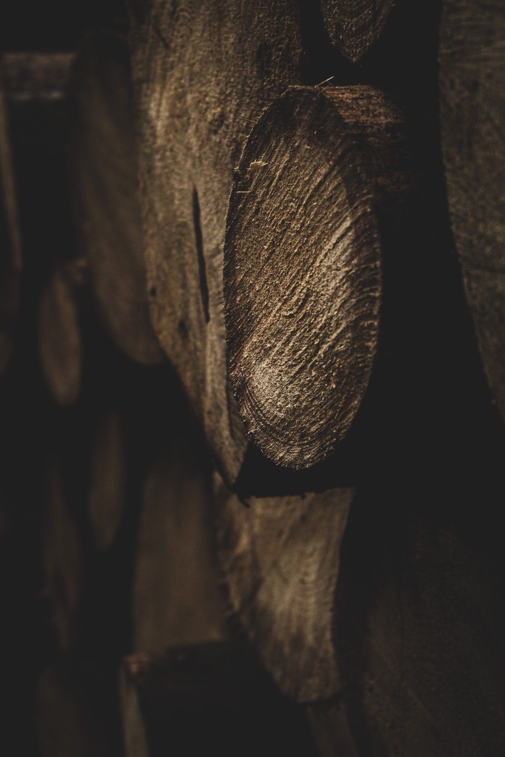 brown wooden tree trunk in grayscale photography