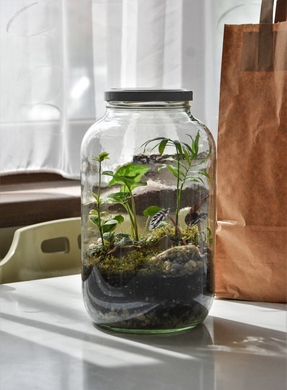 green plant in clear glass jar