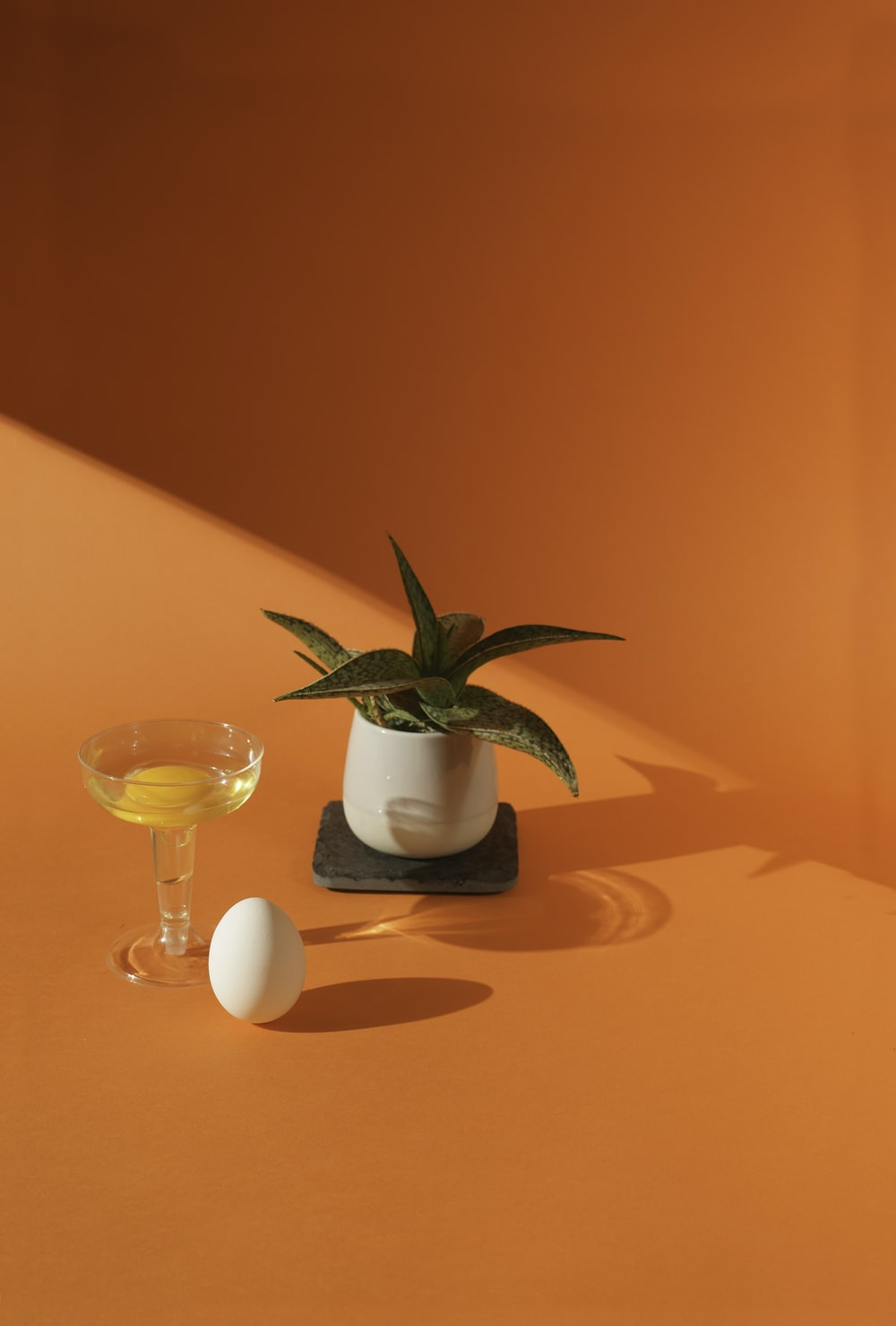 green plant in white ceramic pot on brown wooden table