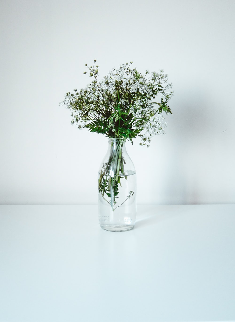 green and white flower in clear glass vase