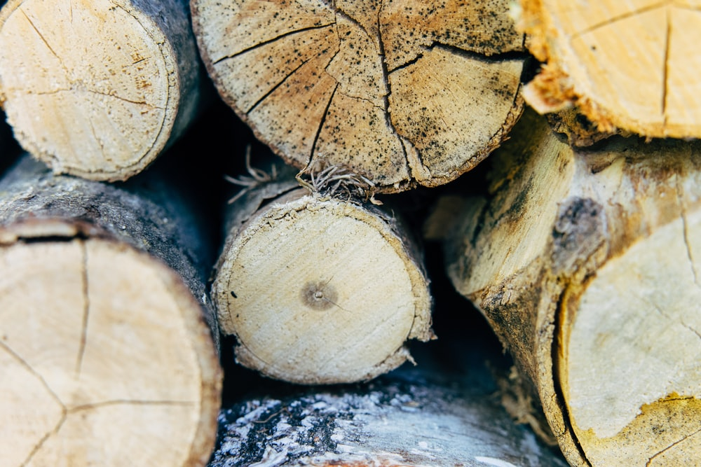 brown wood logs on gray concrete floor