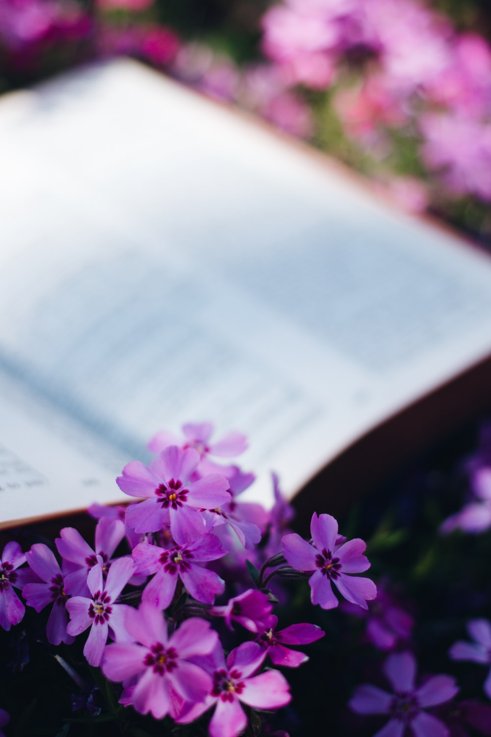 purple flowers on book page
