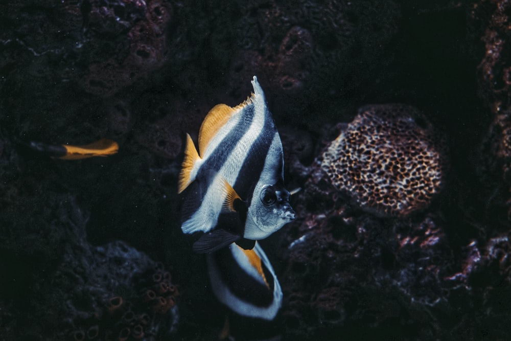 white and black fish in water