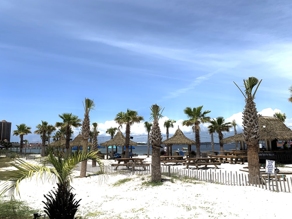 palm trees on white sand during daytime