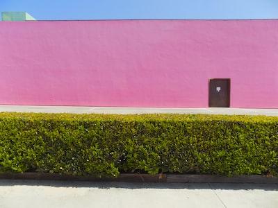 green grass beside red wall