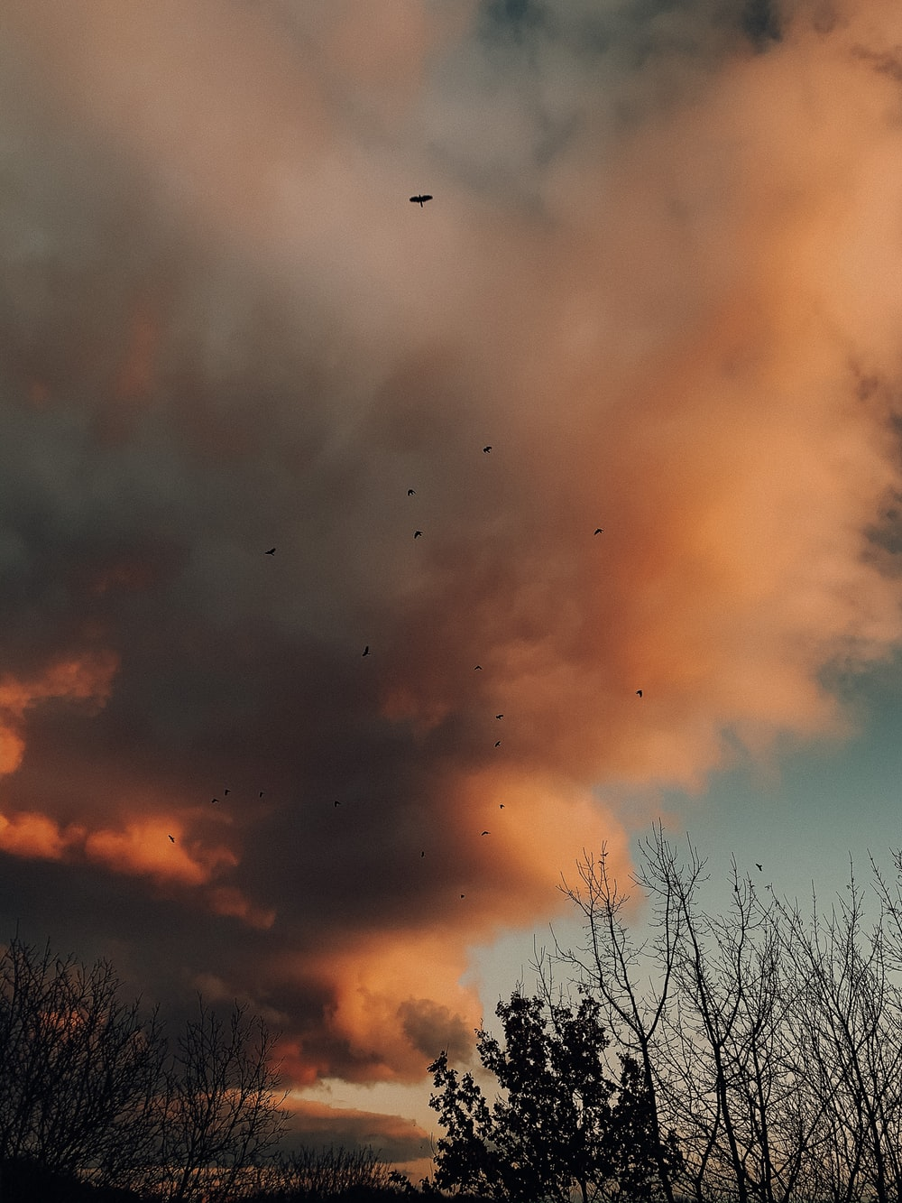 birds flying over trees during sunset
