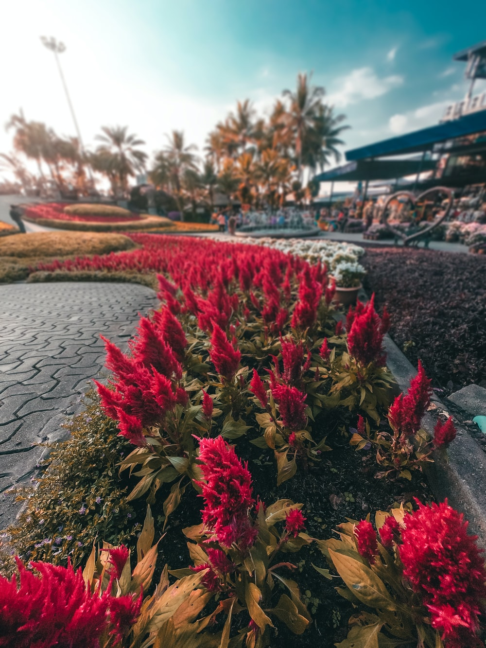 red flowers on body of water during daytime