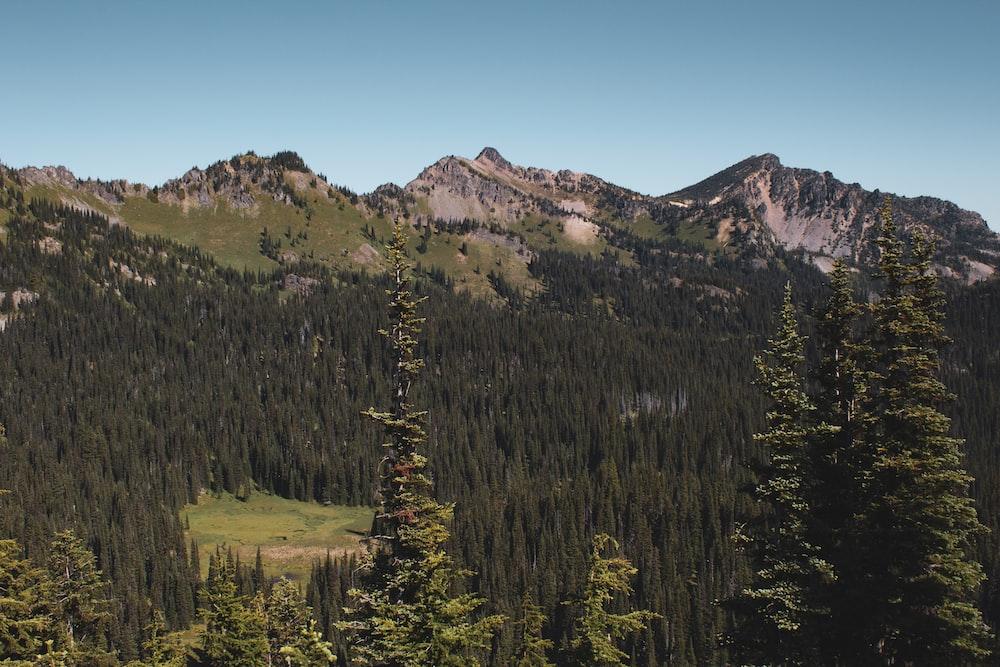 green pine trees near mountain during daytime