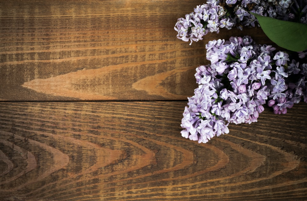 purple flowers on brown wooden table